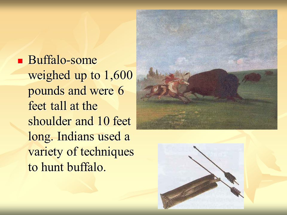 Buffalo-some weighed up to 1,600 pounds and were 6 feet tall at the shoulder and 10 feet long.