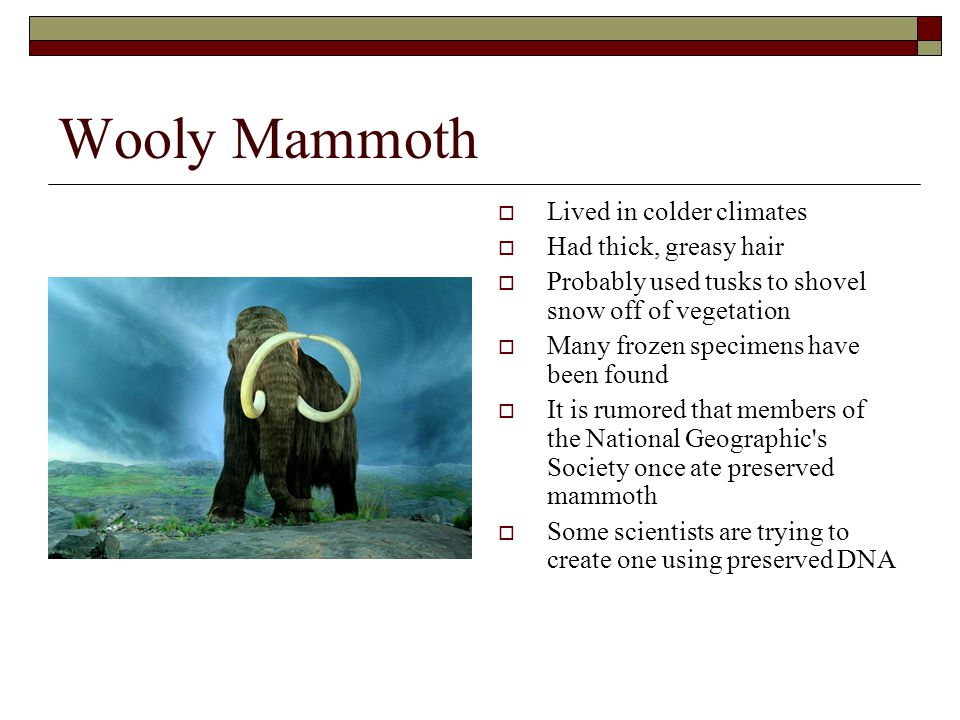 Wooly Mammoth Lived in colder climates Had thick, greasy hair