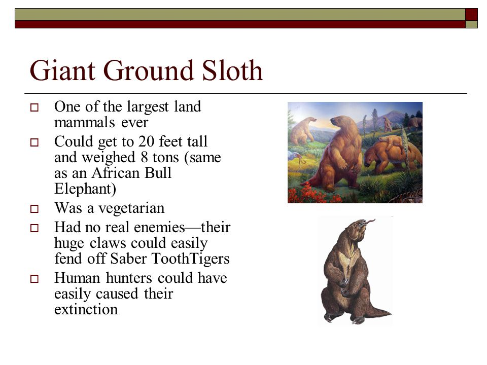Giant Ground Sloth One of the largest land mammals ever