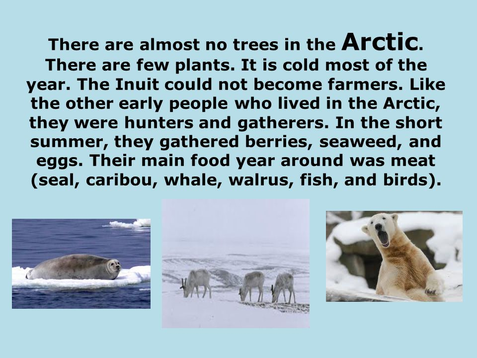 There are almost no trees in the Arctic. There are few plants