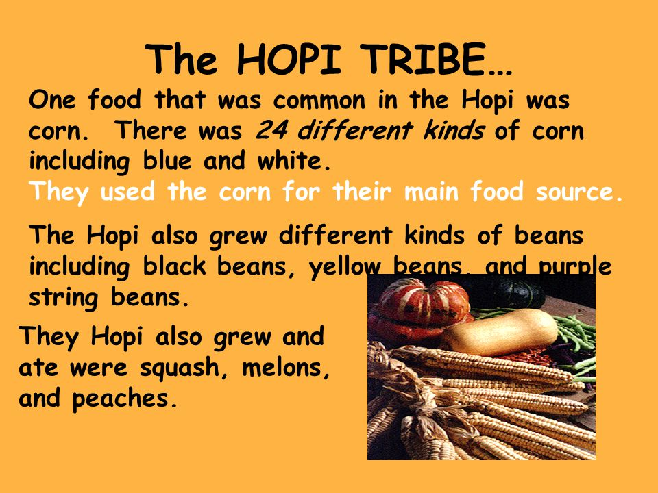 The HOPI TRIBE… One food that was common in the Hopi was corn. There was 24 different kinds of corn including blue and white.