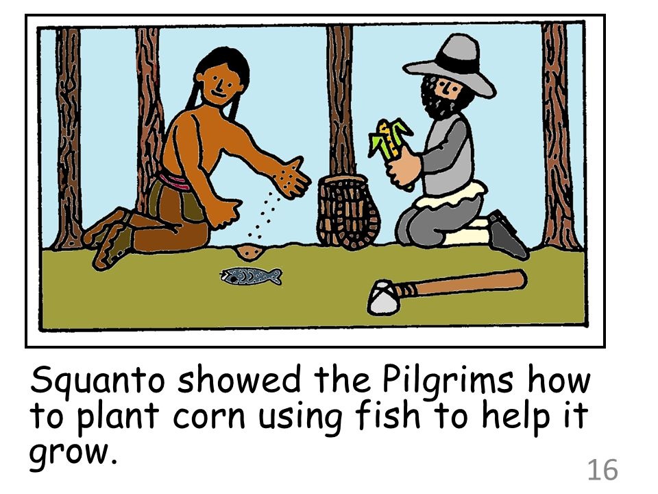 Squanto showed the Pilgrims how to plant corn using fish to help it grow.