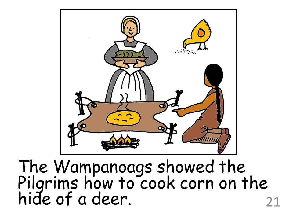 The Wampanoags showed the Pilgrims how to cook corn on the hide of a deer.