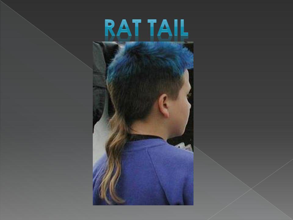 Rat tail