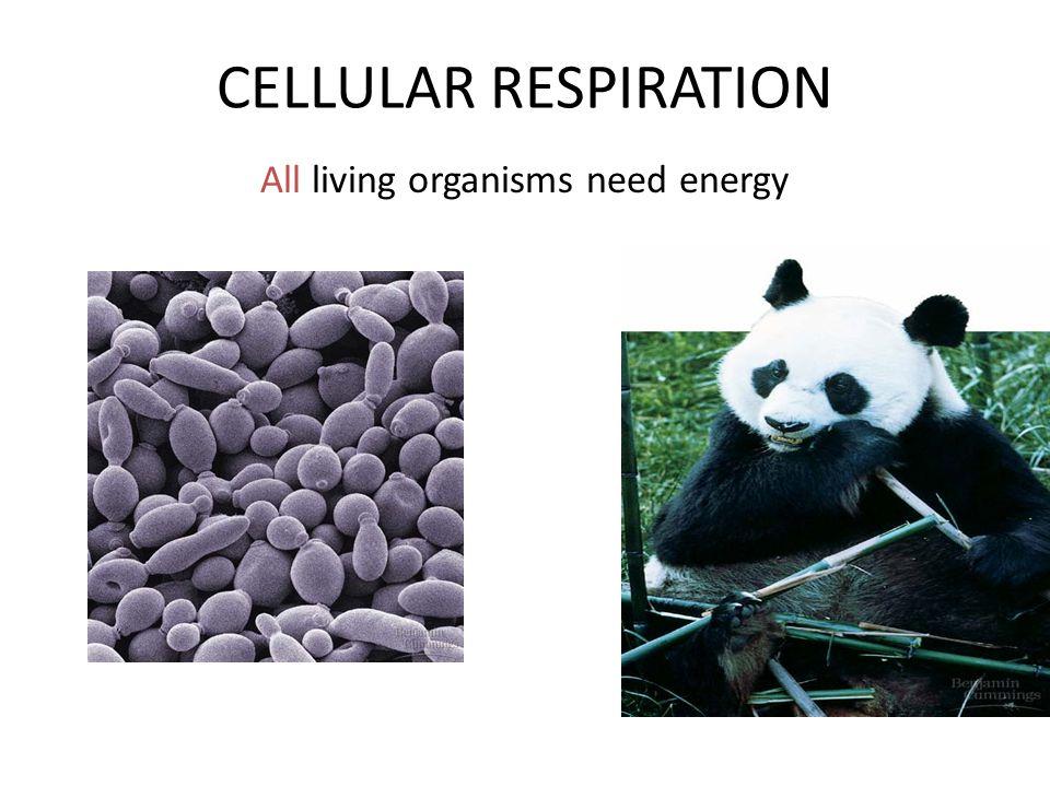 All living organisms need energy
