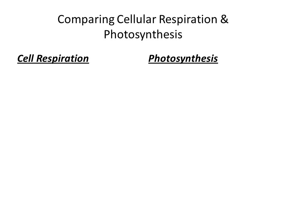 Comparing Cellular Respiration & Photosynthesis