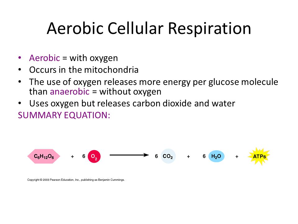 aerobic cellular respiration Cellular respiration: cellular respiration, the process by which organisms combine oxygen with foodstuff molecules to divert the chemical energy in food into life.