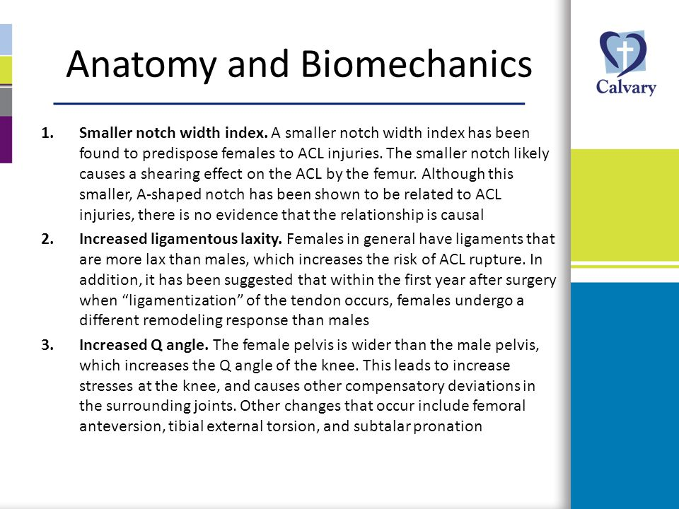 Anatomy and Biomechanics