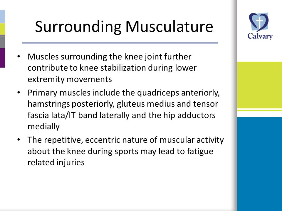 Surrounding Musculature