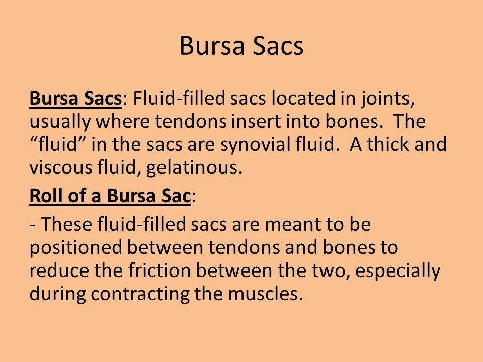 Bursa Sacs