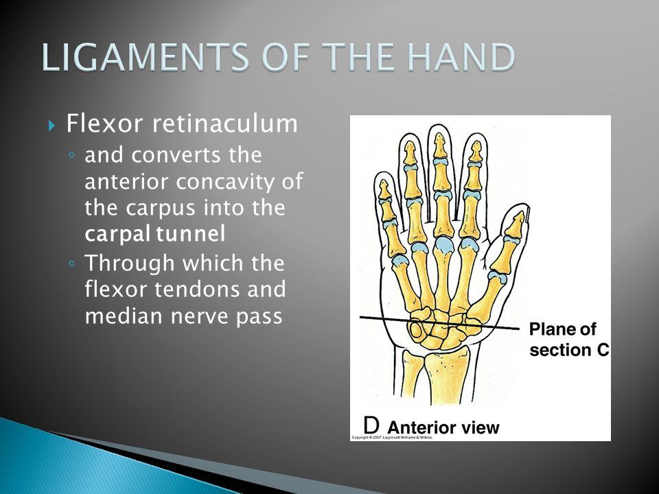 LIGAMENTS OF THE HAND Flexor retinaculum