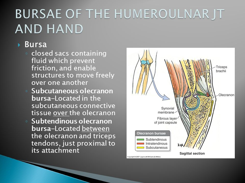 BURSAE OF THE HUMEROULNAR JT AND HAND