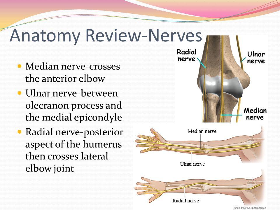 Anatomy Review-Nerves
