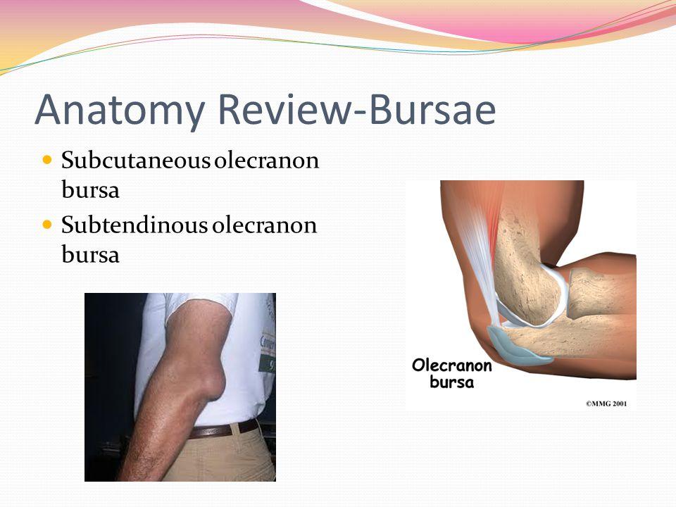 Anatomy Review-Bursae
