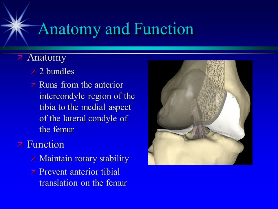 Anatomy and Function Anatomy Function 2 bundles