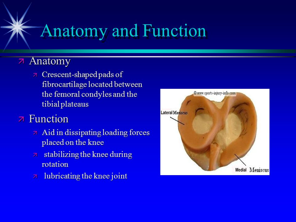 Anatomy and Function Anatomy Function