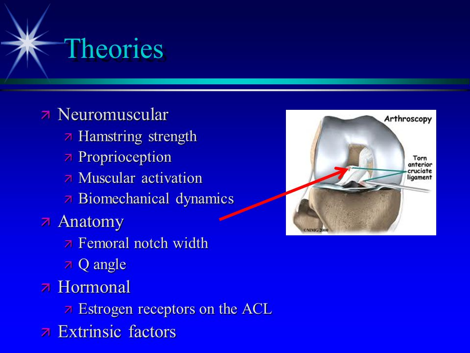 Theories Neuromuscular Anatomy Hormonal Extrinsic factors