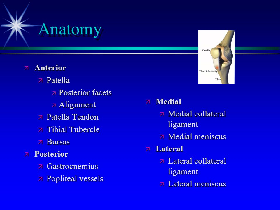 Anatomy Anterior Patella Posterior facets Medial Alignment
