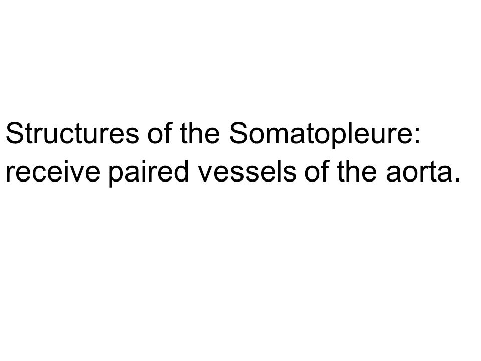 Structures of the Somatopleure: receive paired vessels of the aorta.