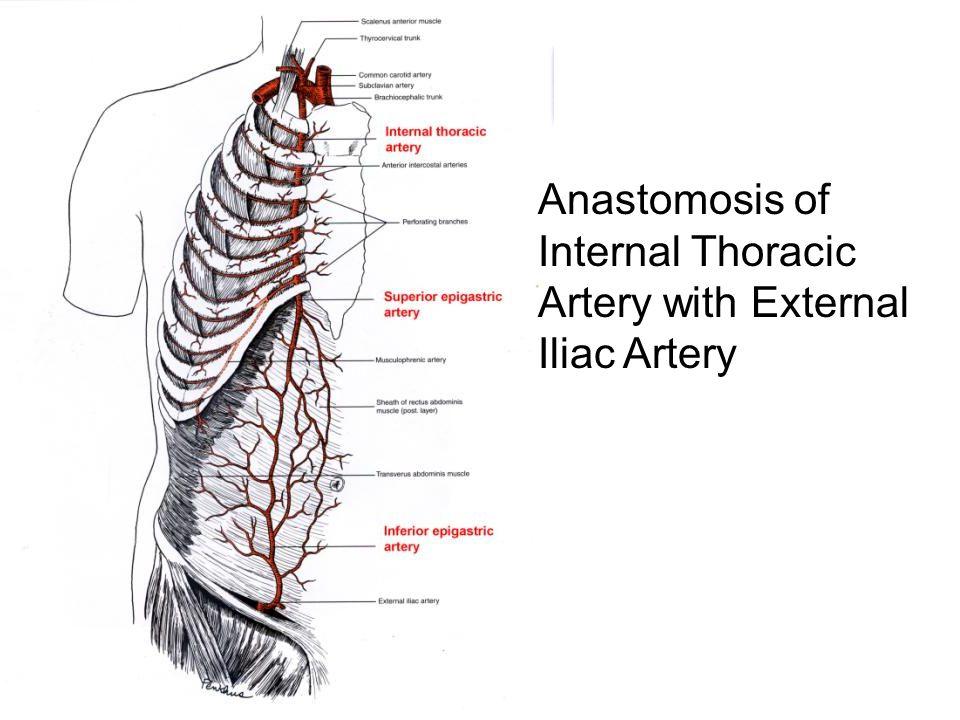 peripheral circulation