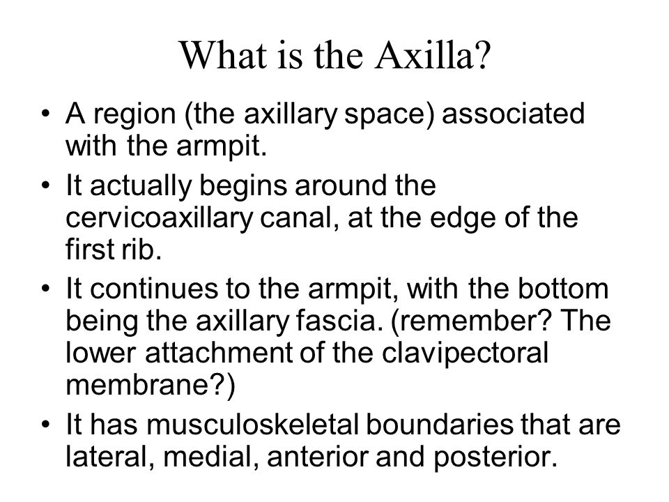 What is the Axilla A region (the axillary space) associated with the armpit.