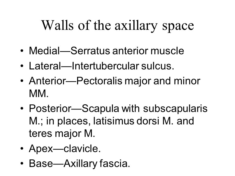 Walls of the axillary space