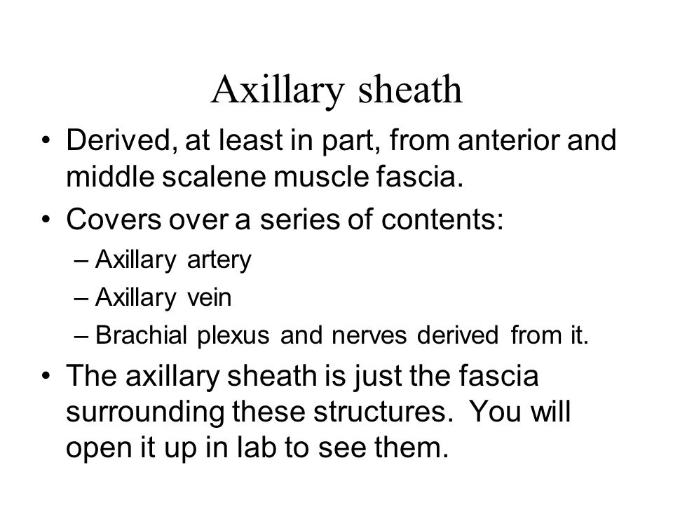 Axillary sheath Derived, at least in part, from anterior and middle scalene muscle fascia. Covers over a series of contents:
