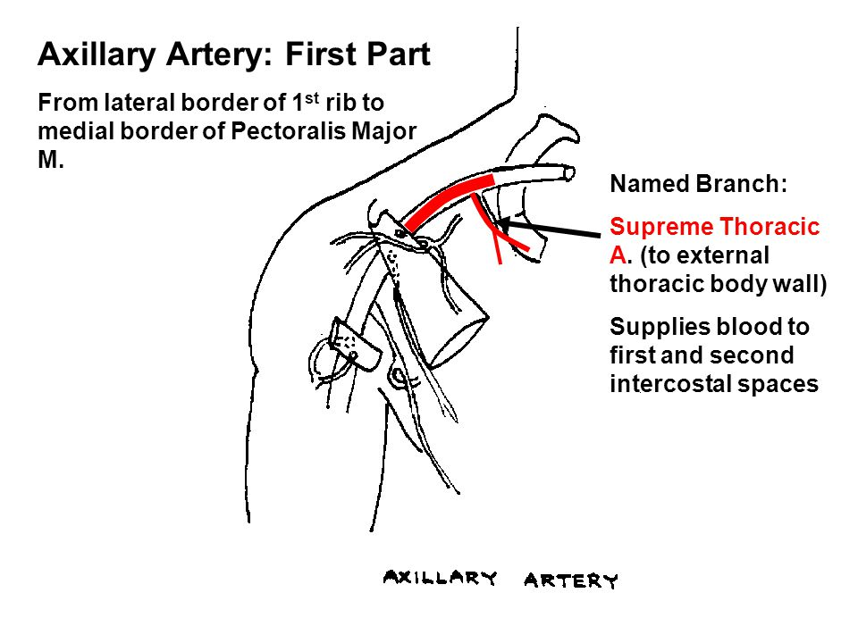 Axillary Artery: First Part