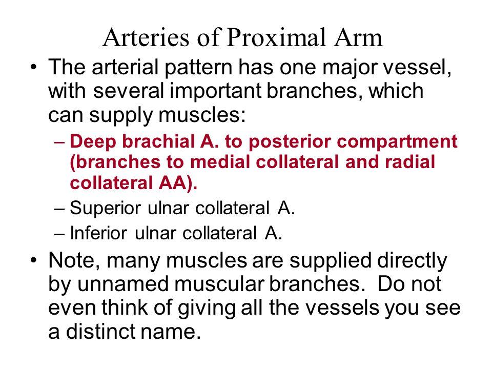 Arteries of Proximal Arm