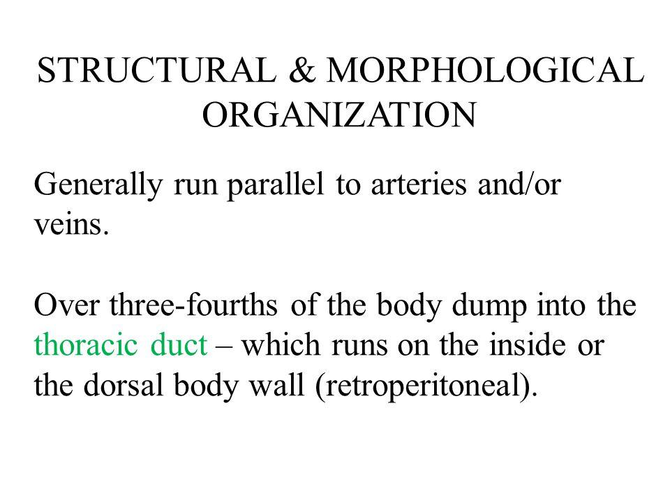 STRUCTURAL & MORPHOLOGICAL ORGANIZATION