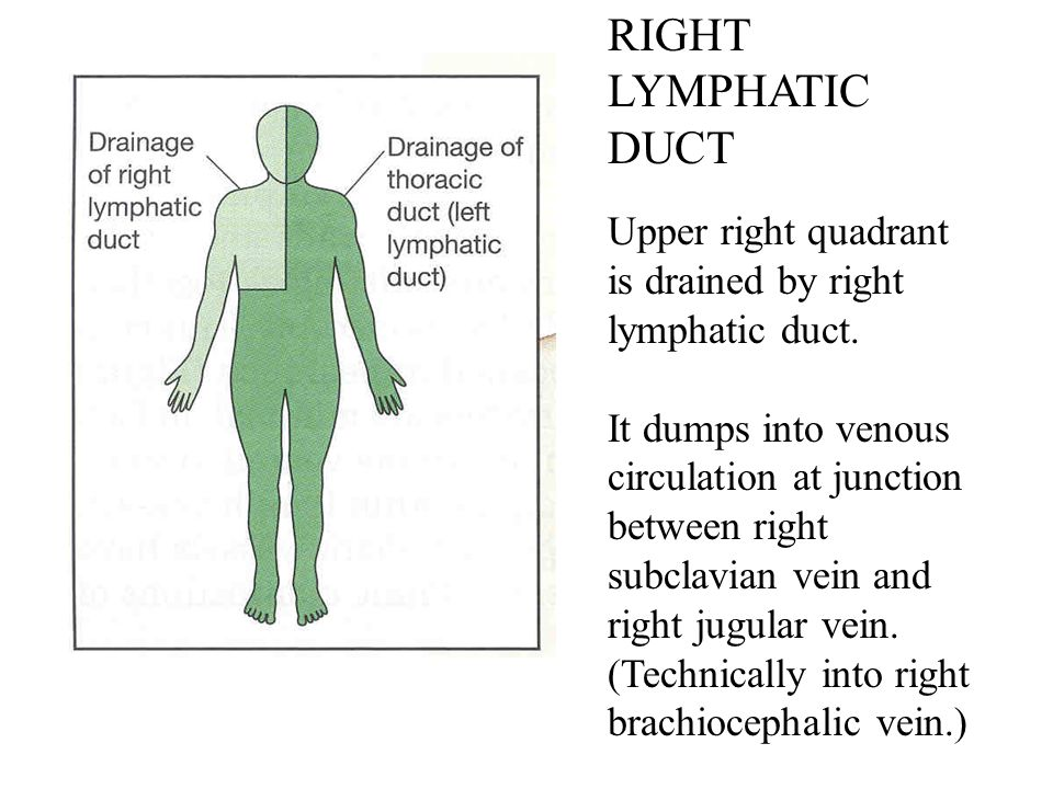 RIGHT LYMPHATIC DUCT Upper right quadrant is drained by right lymphatic duct.
