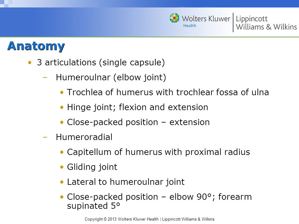 Anatomy 3 articulations (single capsule) Humeroulnar (elbow joint)