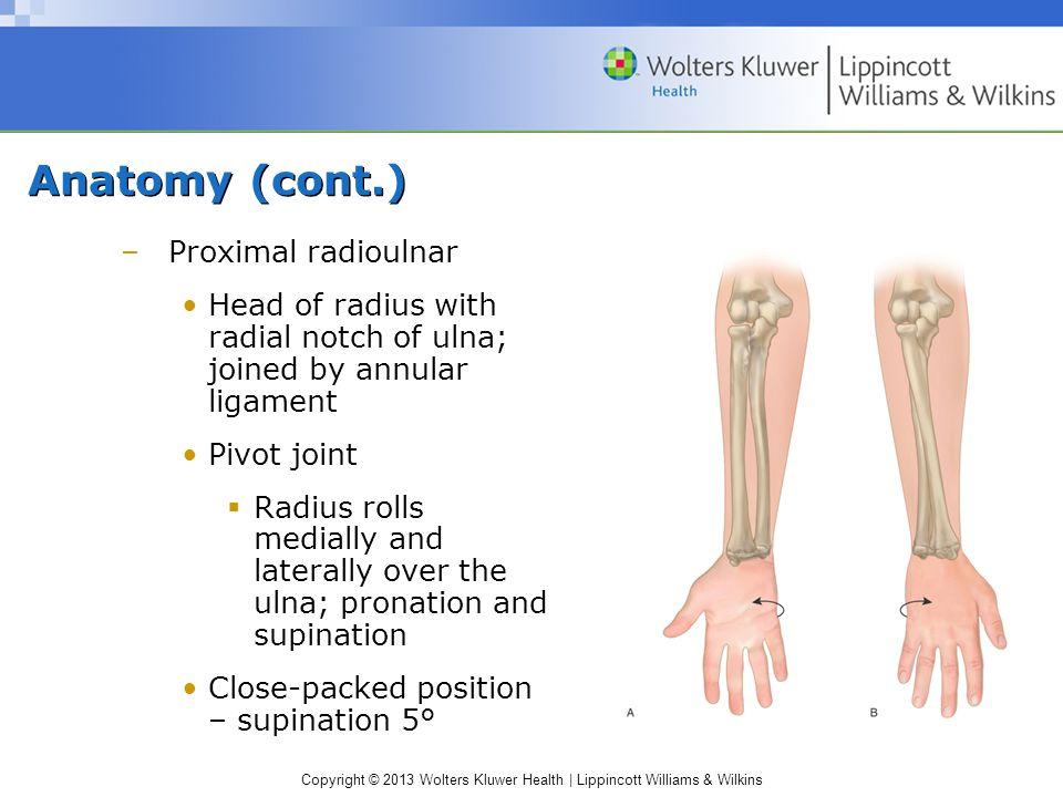 Anatomy (cont.) Proximal radioulnar