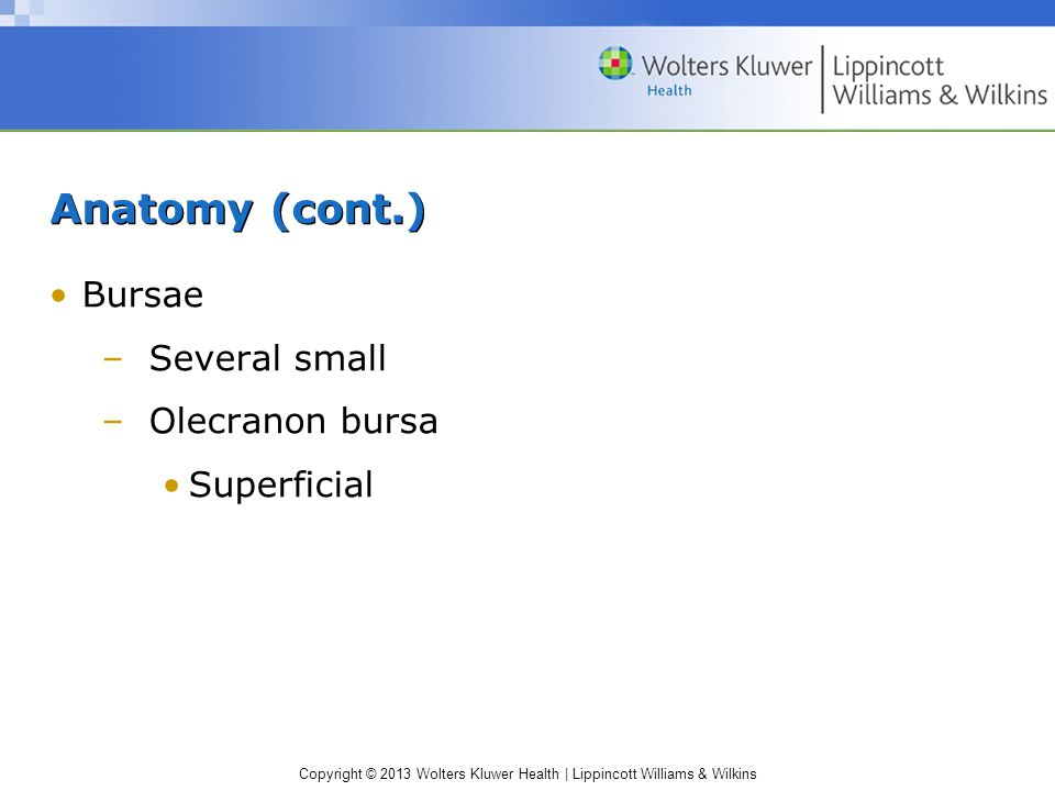 Anatomy (cont.) Bursae Several small Olecranon bursa Superficial