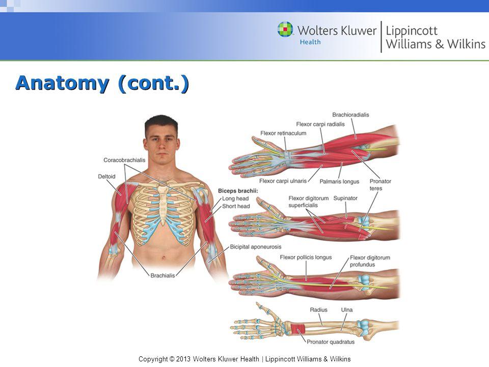 Anatomy (cont.)