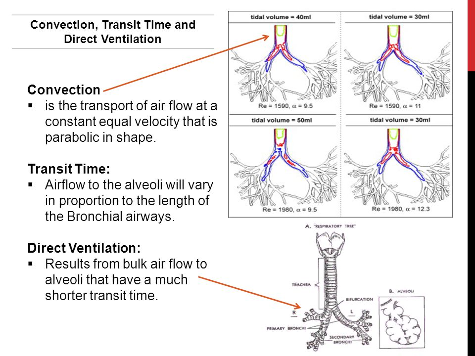 Convection, Transit Time and Direct Ventilation