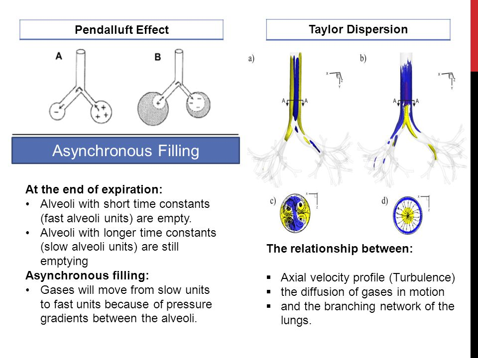 Asynchronous Filling Taylor Dispersion Pendalluft Effect