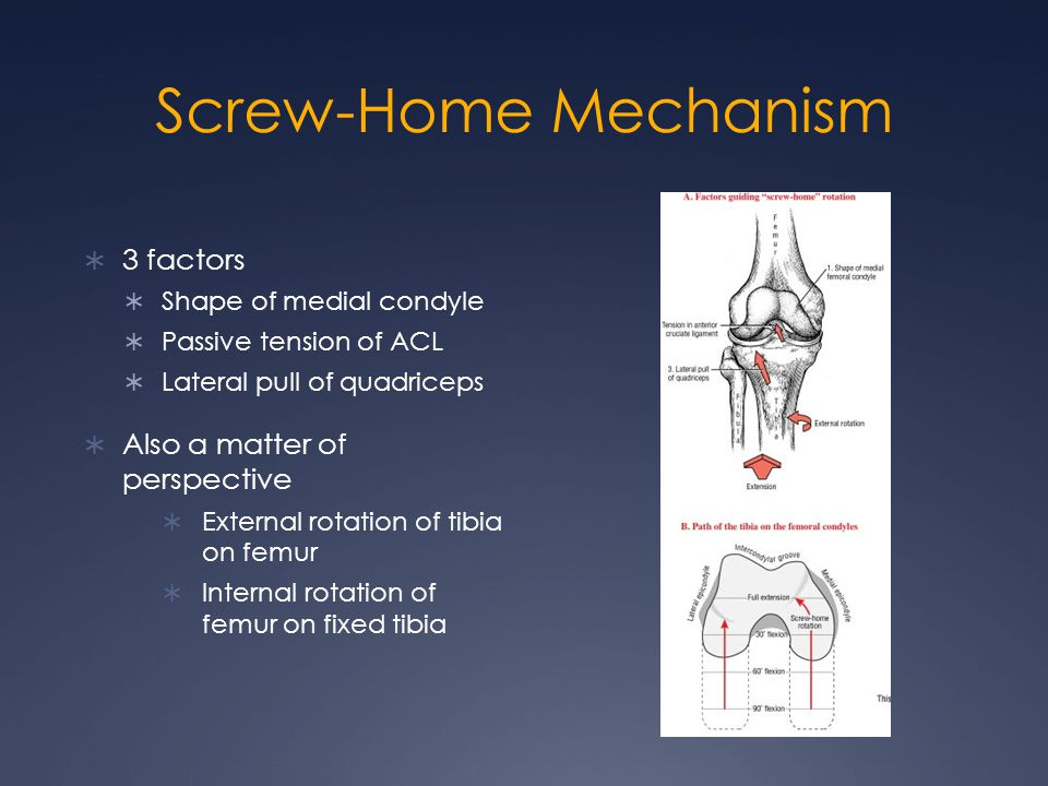 Screw-Home Mechanism 3 factors Also a matter of perspective