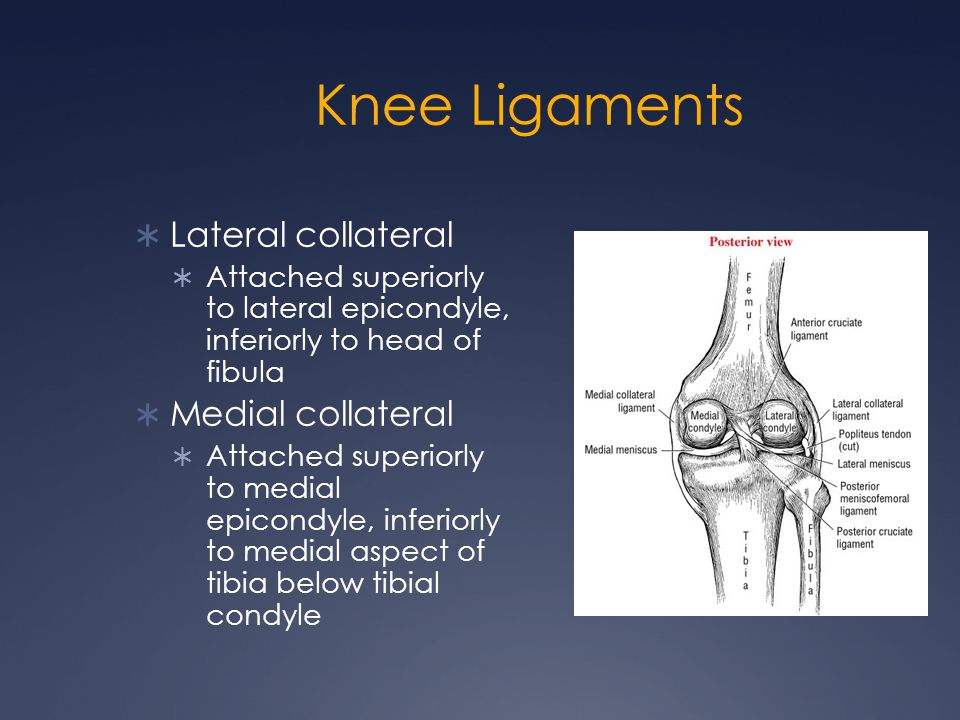 Knee Ligaments Lateral collateral Medial collateral