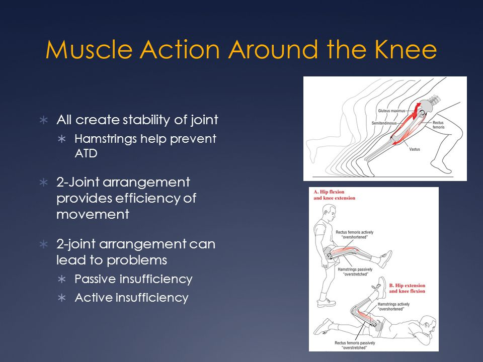 Muscle Action Around the Knee