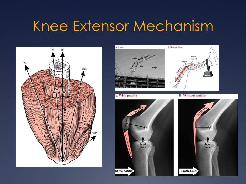 Knee Extensor Mechanism