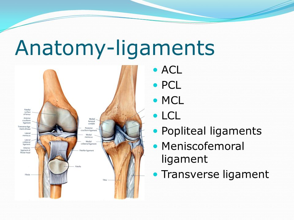 Anatomy-ligaments ACL PCL MCL LCL Popliteal ligaments