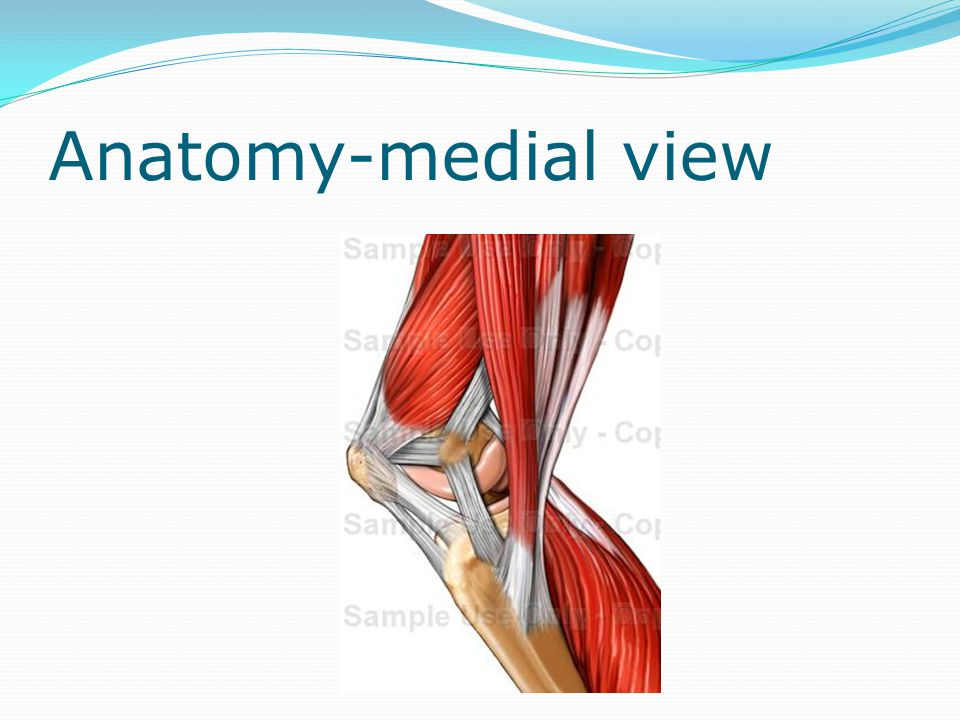 Anatomy-medial view