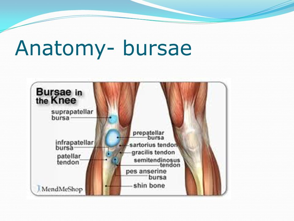 Perfect Knee Bursa Anatomy Collection - Human Anatomy Images ...