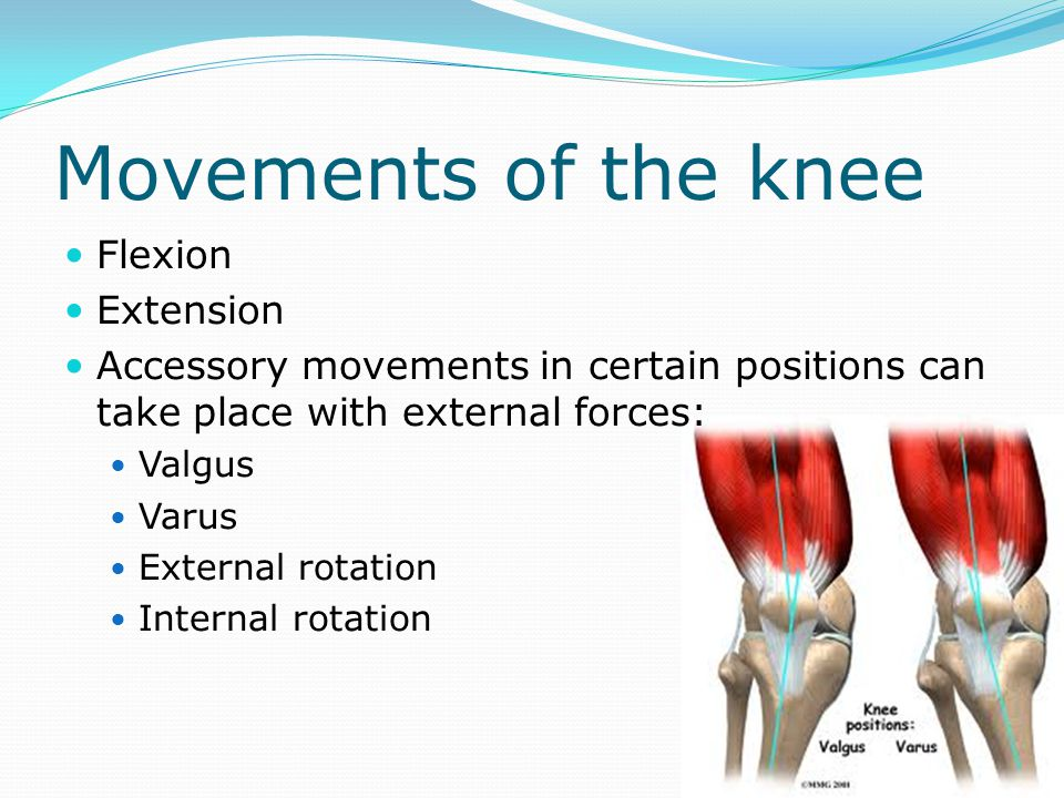 Movements of the knee Flexion Extension