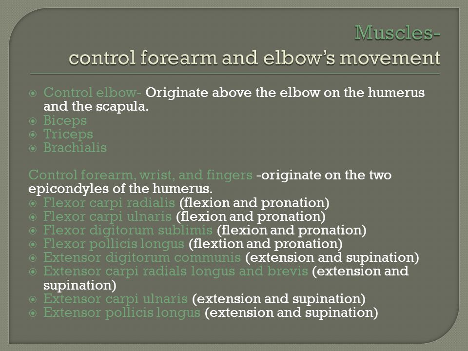 Muscles- control forearm and elbow's movement