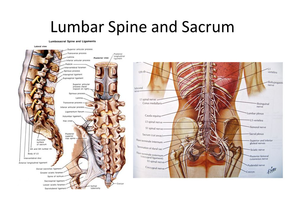Lumbar Spine and Sacrum
