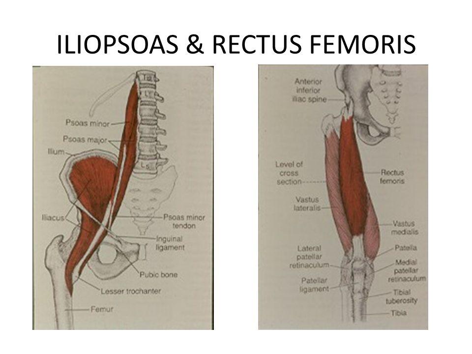 ILIOPSOAS & RECTUS FEMORIS