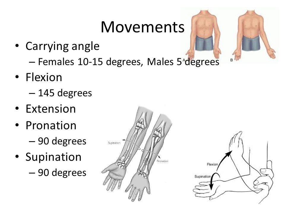 Movements Carrying angle Flexion Extension Pronation Supination