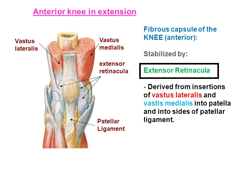 Anterior knee in extension